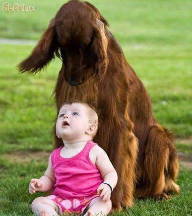 kutya baba know