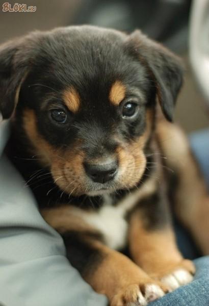 Aranyos Kutyakölyök