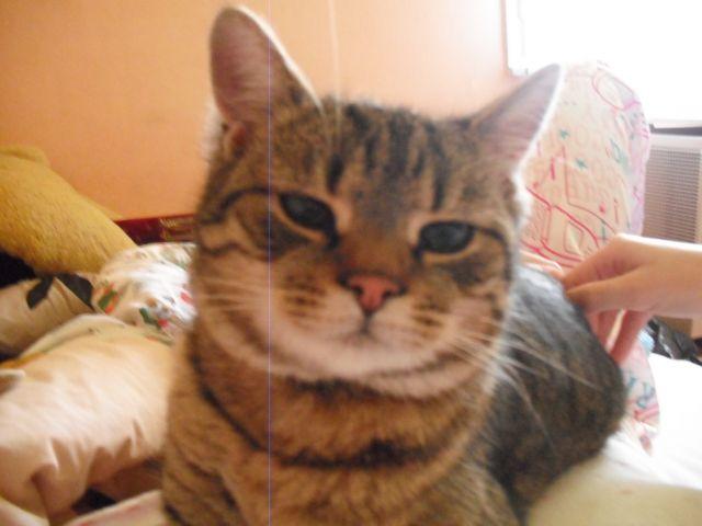Macska Házimacska