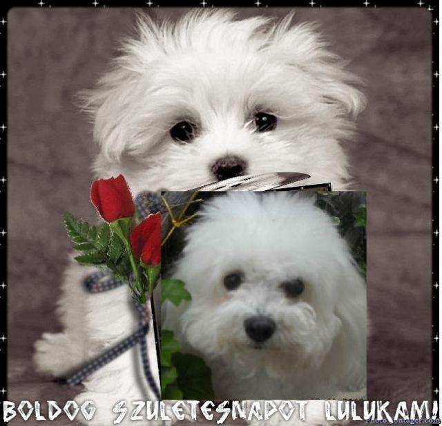 boldog születésnapot kutyás Kutyák Boldog Születésnapot   MuzicaDL boldog születésnapot kutyás